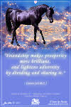 Horse ecards horse greeting cards new cards bookmarktalkfo Images