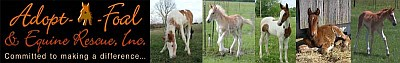 Adopt A Foal
