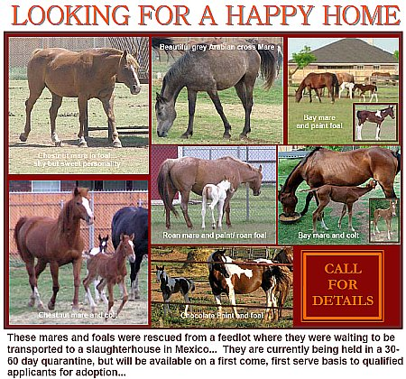 Horses for Adoption Printable Flyer