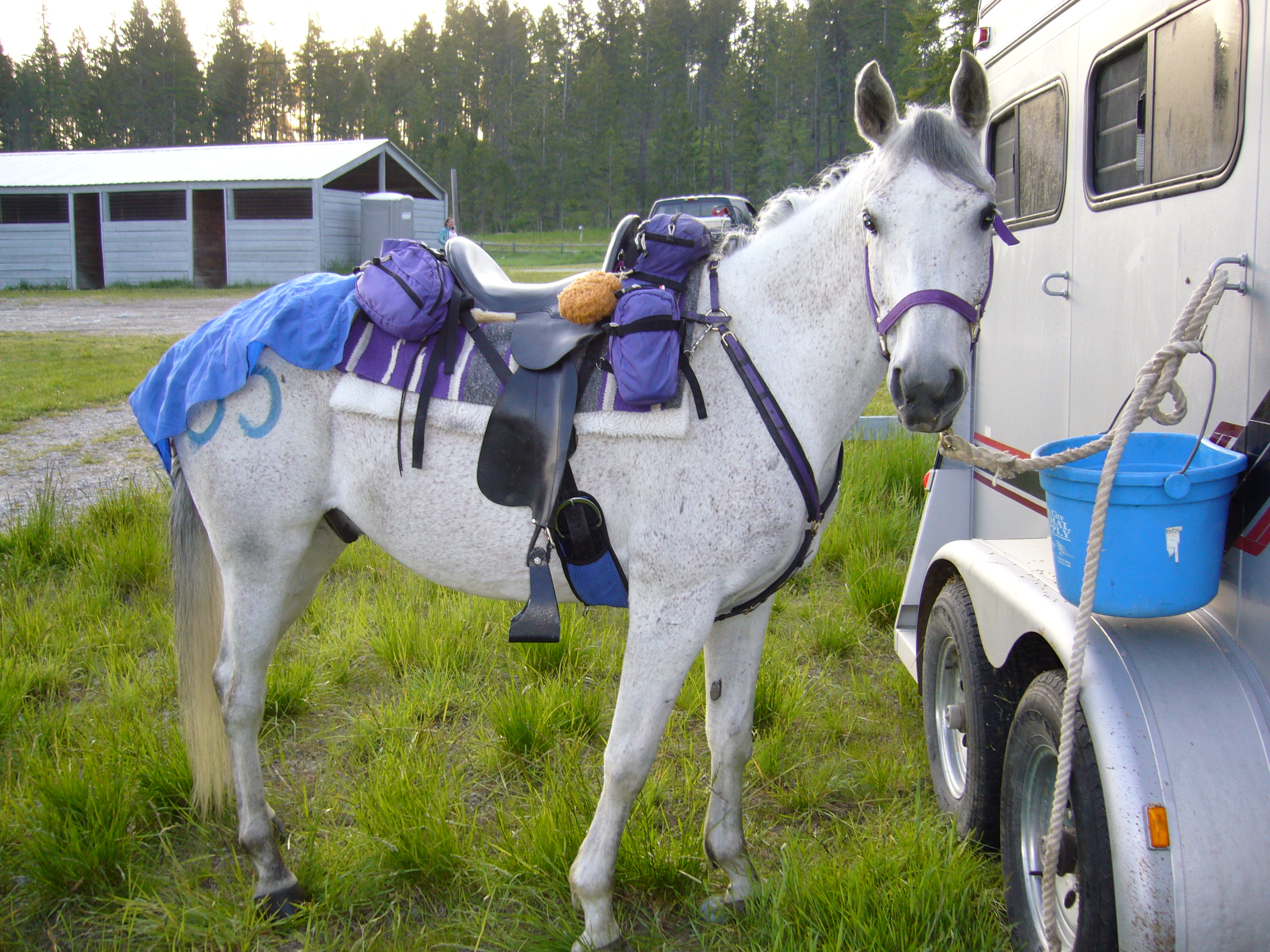 From Fall to Winter: A Helpful Checklist for Horse Owners