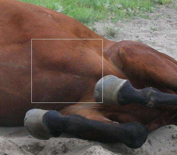 A Horse is a Horse – Except of Course, When in Pain