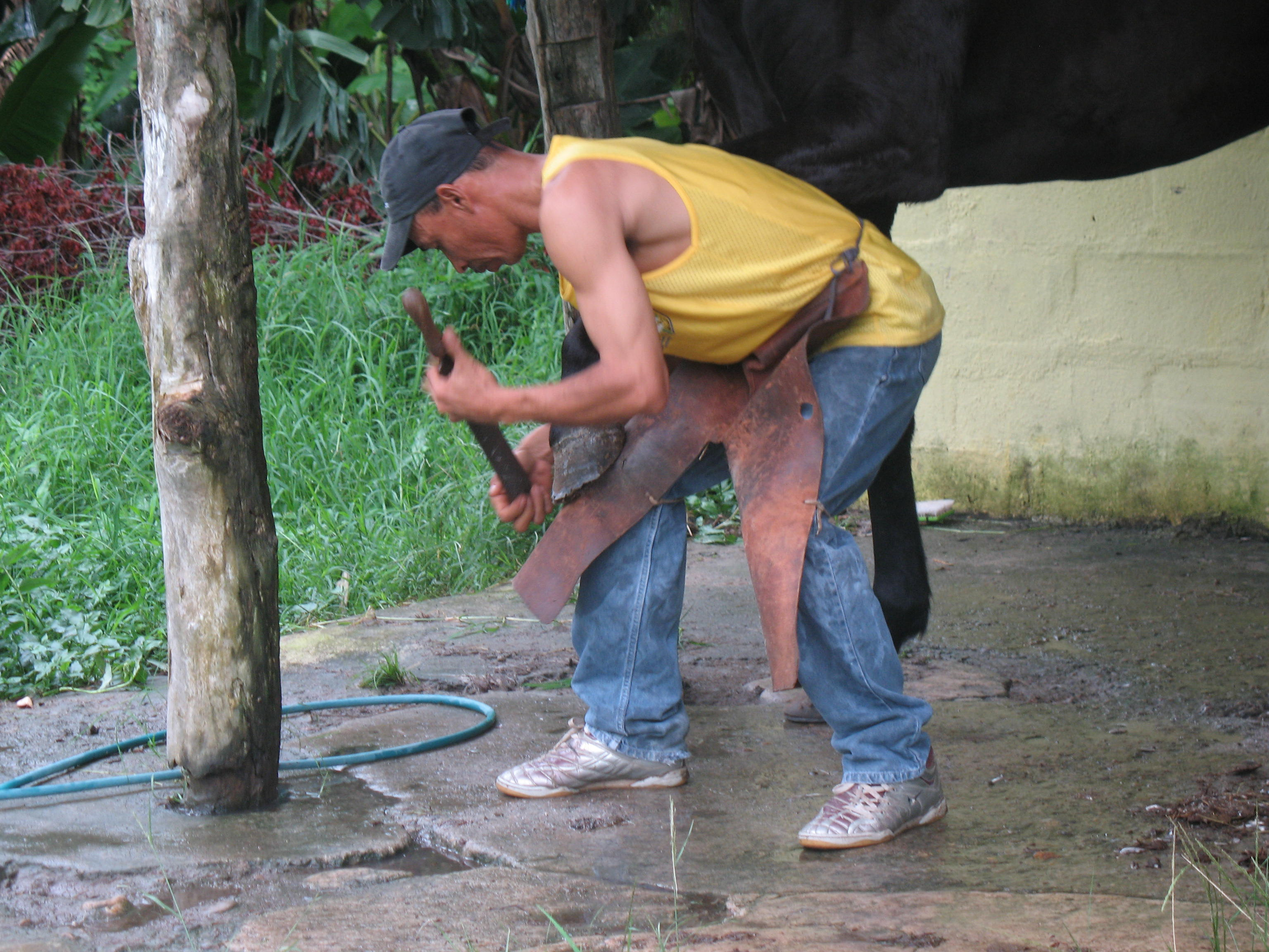Seven Questions to Ask Before You Hire a Farrier