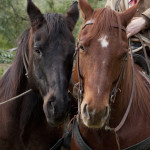 "Tommy aka Wild Mustang Bravo and a buddy during a break on the set of ""Ricky Schroder's Wild Hearts"""