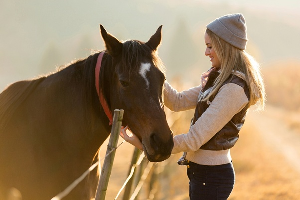Natural Horsemanship Part One – Bonding Without Riding