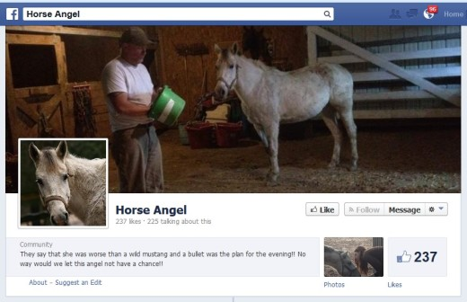 Horse Angel (on Facebook)