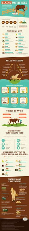 Tips for Choosing a Feed for Your Horse