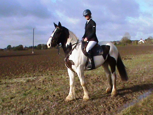 Pinto Horse with Rider