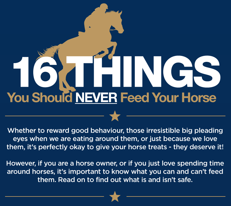 16 Things You Should Never Feed Your Horse [Infographic]