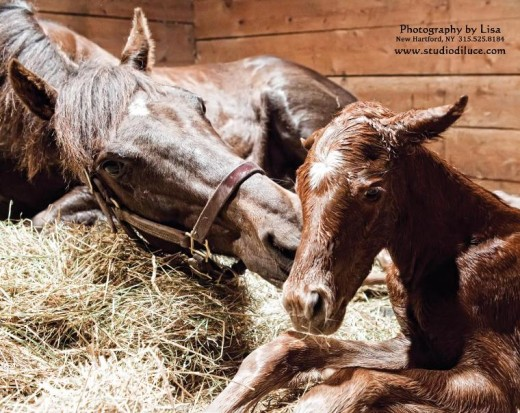 The Foal Project by Lisa Miller