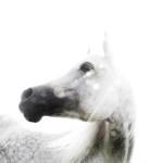 The Raw Horse by Sebastiano Vitale