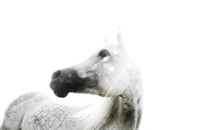 The raw horse Year of the Horse photo exhibit needs your help